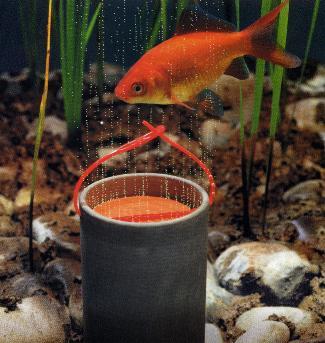 Berwintern for Was brauchen fische im teich