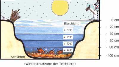 Teichvorbereitung for Fische im teich im winter